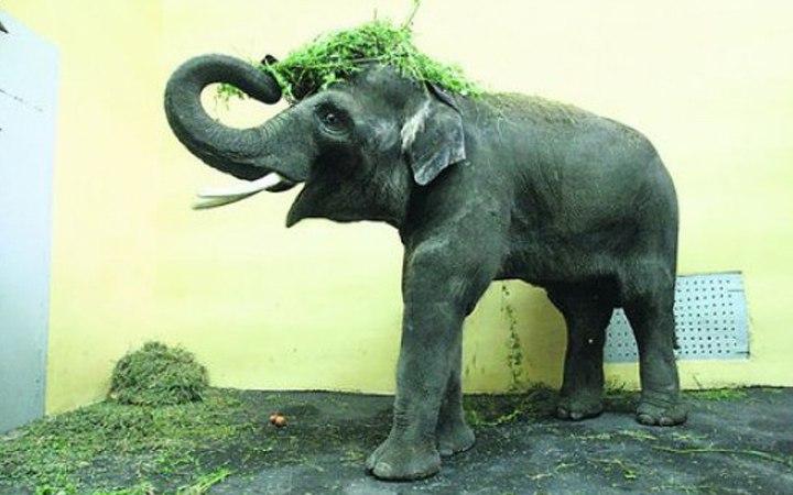 Слон Хорас. Киевский зоопарк