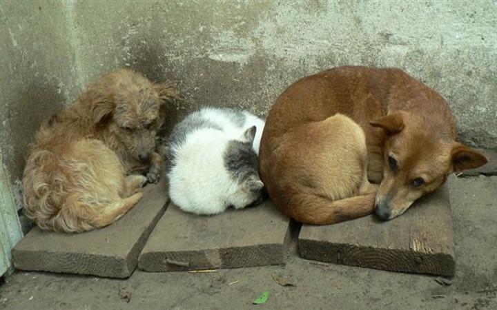 Всемирный день бездомных животных. Бездомные животные