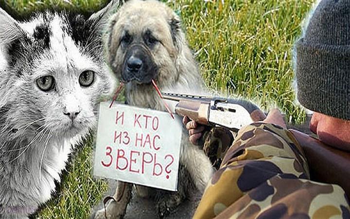 Всемирный день бездомных животных. Убийство бродячих животных