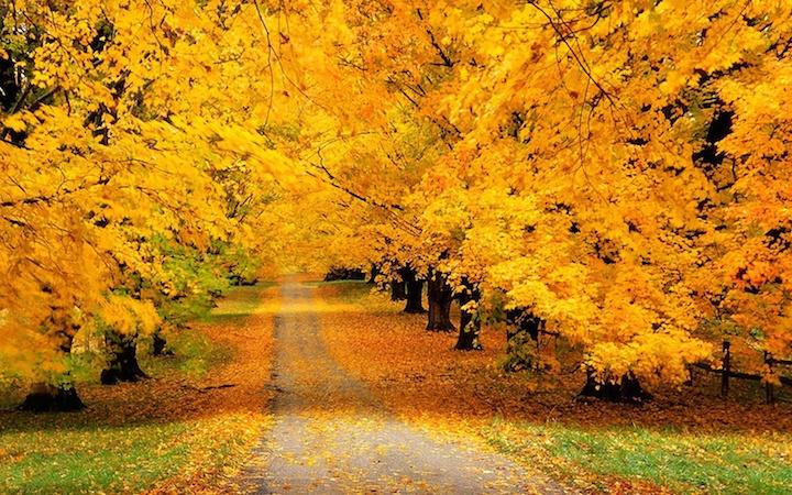 Золотая осень в Украине