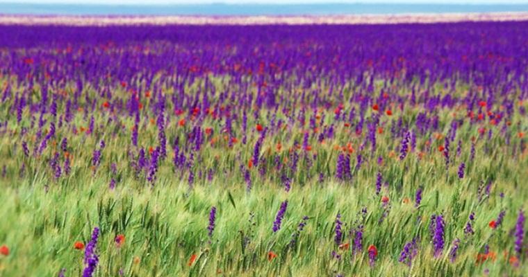Тур по Украине: Аскания-Нова, Бирючий остров и Каменная Могила