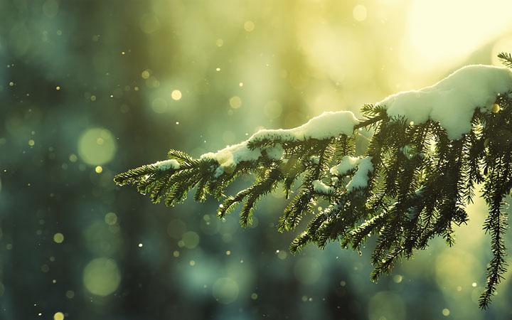 Зимний Тростянец. Сказочная экскурсия