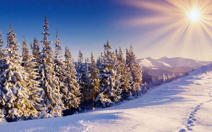 День игры в прятки с зимой