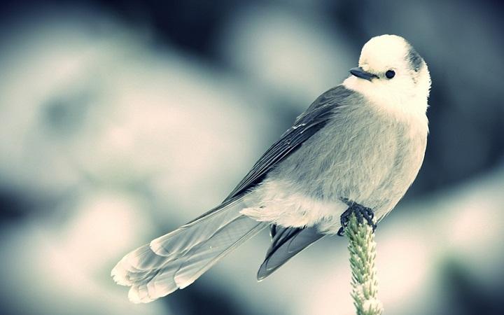 День белоснежных птиц