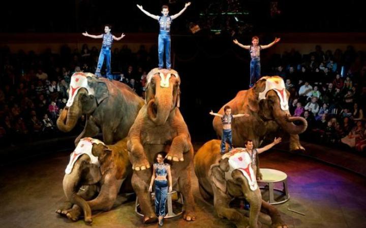Международная шоу-программа в цирка братьев Гартнеров