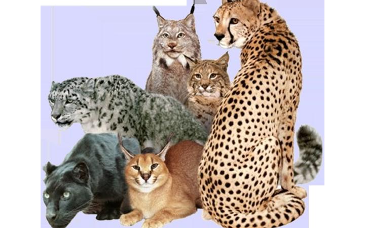 Главной достопримечательностью зверинца станут его экзотические питомцы