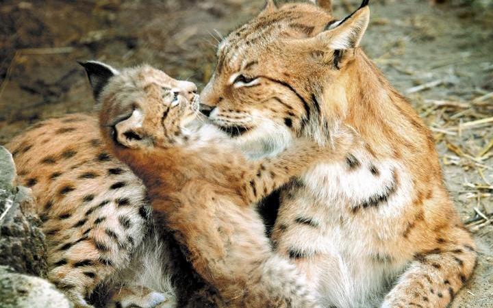 Вход в Киевский зоопарк 8 Марта для дам будет дешевле
