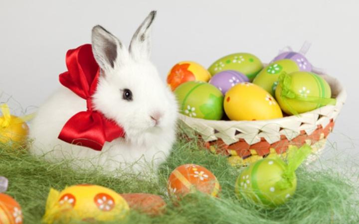 Кролики – это не только ценный мех!