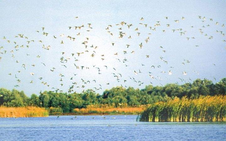 Любимое озеро пернатых