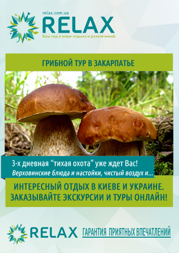 Грибной тур в Закарпатье постер