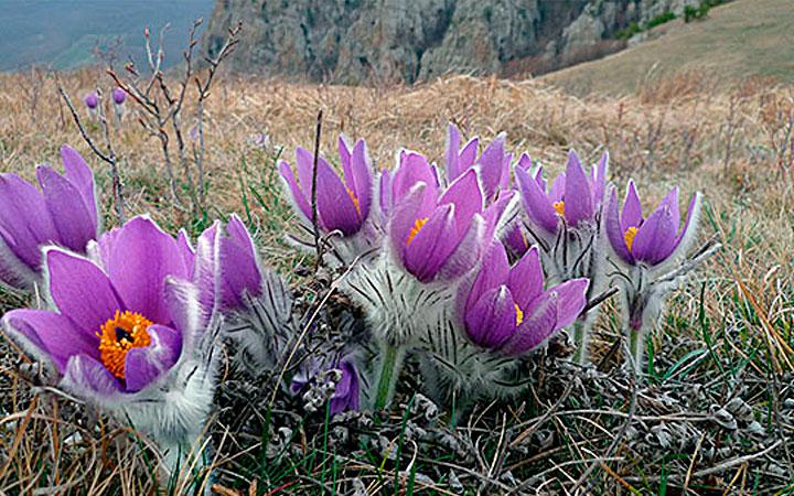 Источник фото: fatelines.net