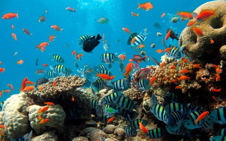 8 июня Всемирный день океанов