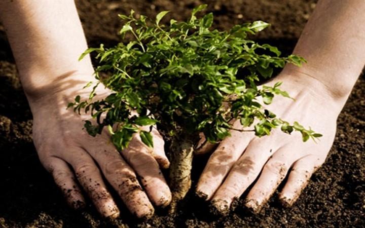 Озеленение дерево человек