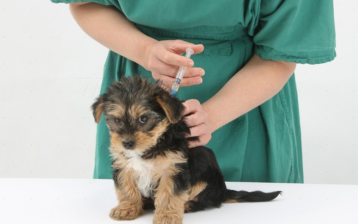 День работник ветеринарной медицины Украины