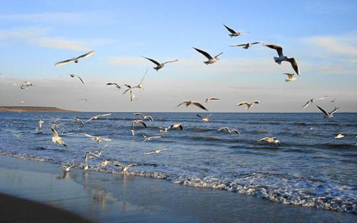 Одесса. Пляж. Вода. Природа
