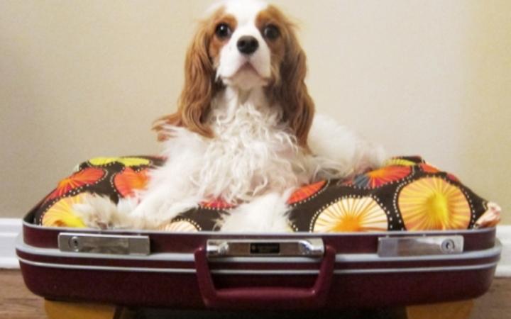 Кроватка для собаки из чемодана