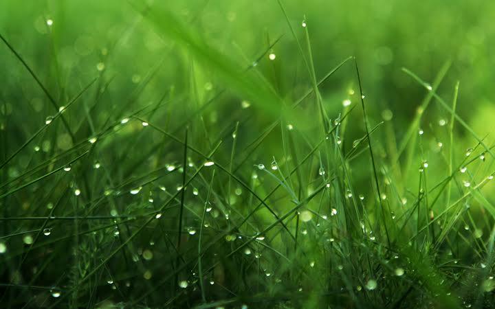 Сысоев день. Трава. Лето. Природа