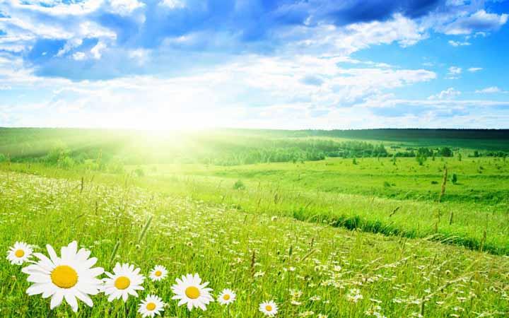Лето. Природа. Луг. Цветы.