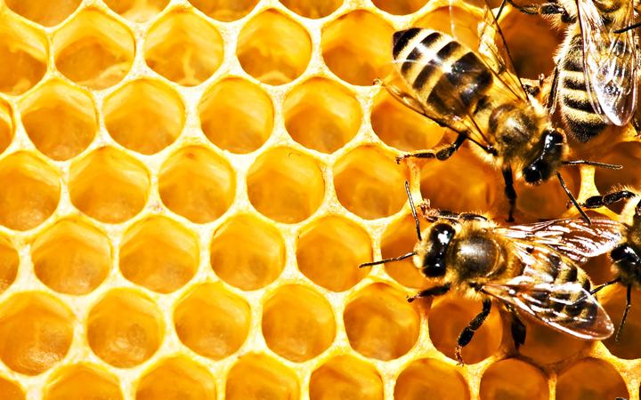 Пчелы. Мед. День Пасечника
