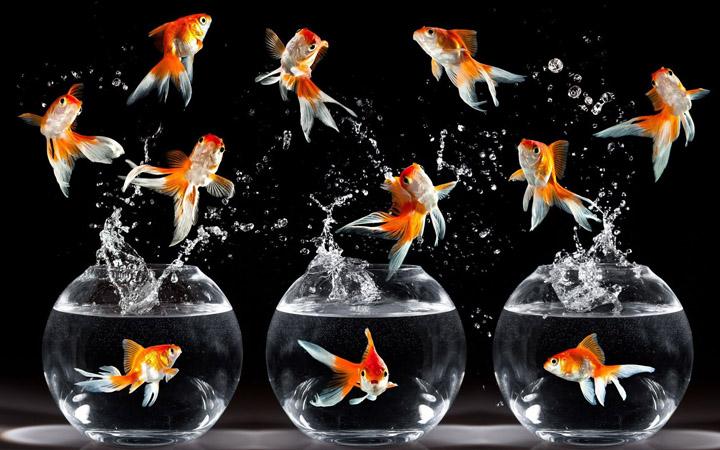 Рыбки. Приложение Покорми рыбок