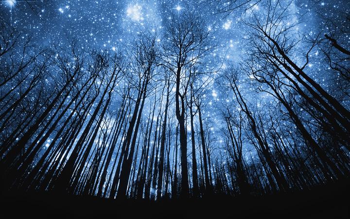 Звезда. Звездопад. День святого Лаврентия