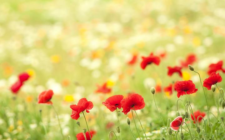 Лето. Природа. Цветы. Праздники недели 17-23 августа