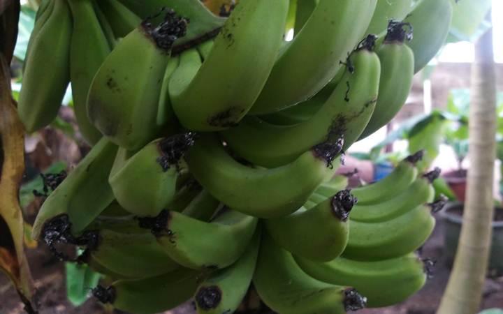 Идея на выходные: «Бананы на снегу» или новый бизнес по-украински