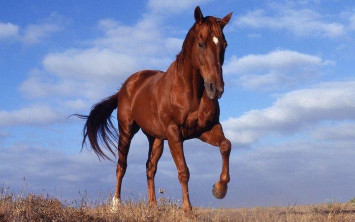 Экскурсия в Букский каньон и конно-спортивный комплекс