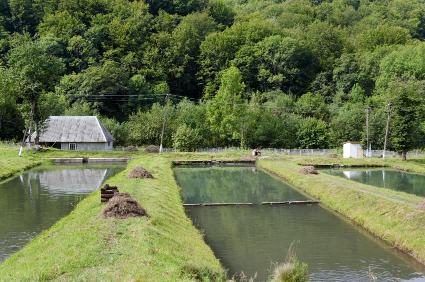 Форелевое хозяйство; Тур по Украине: Отпуск в Карпатах. Верховина