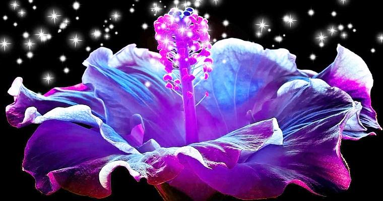 Волшебный цветок доброты