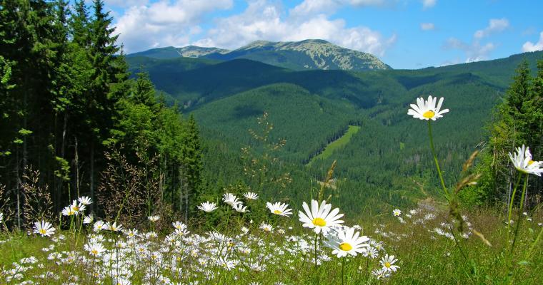 Туры по Украине: Отпуск в Карпатах. Верховина