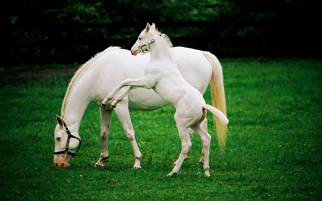 Тур по Украине: Парк Софиевка и конный завод