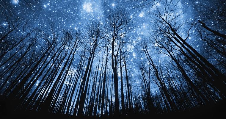 Космические ночи в Скворечнике