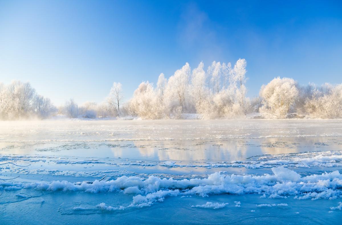 Тур по Украине: Зимнее сафари: к зубрам в Сеймский заповедник