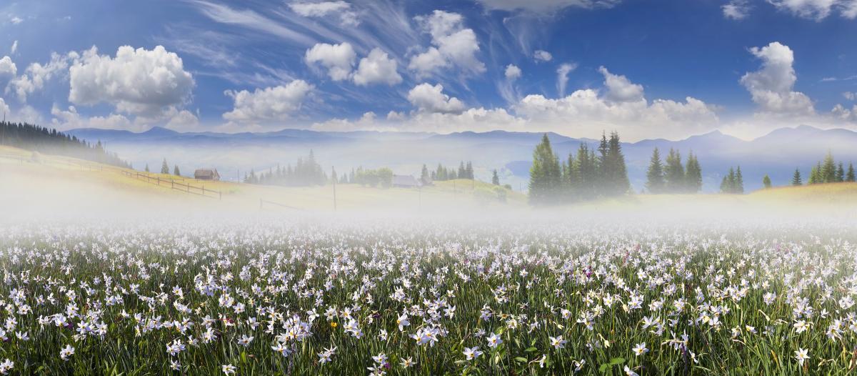Тур по Украине: Сакура и первоцветы на Закарпатье