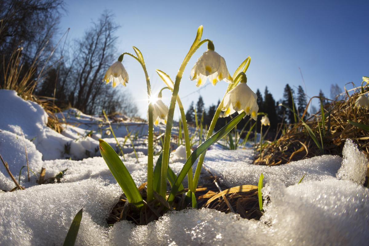 Тур по Украине: Закарпатская сказка. 8 марта