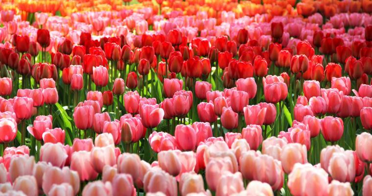 Тур по Украине: Умань и парк тюльпанов в Кропивницком