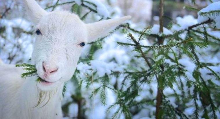 Тур по Украине: Праздничные козы и сырные традиции