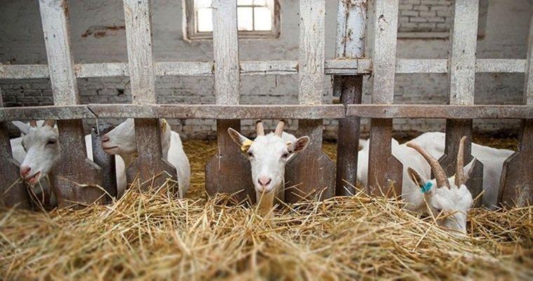 Туры для детей: козья ферма