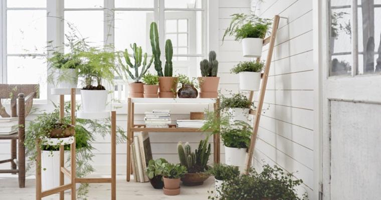 Домашняя оранжерея: выбор подставки для цветов