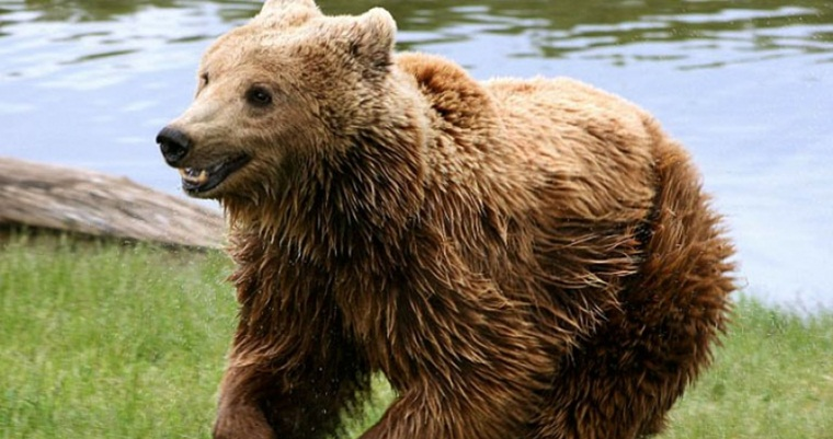 Центр реабилитации медведей