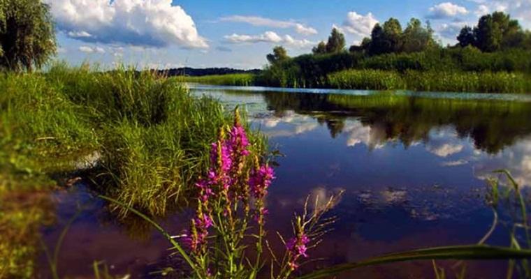 Тур в Херсон : Олешківські піски + долина тюльпанів