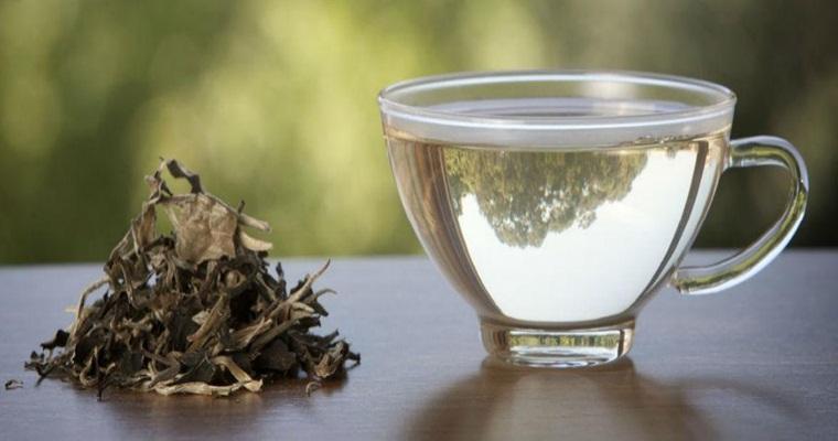 Белый чай – напиток императоров