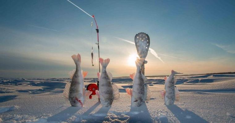 Эхолот для зимней рыбалки: на что обратить внимание